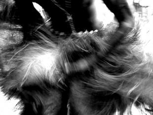 Ein Tänzer bei einer seltenen Regen-Zeremonie am Fluss Mono im Westen Benins im Zustand der Trance. Sein Gesicht ist zum Schutz vor bösen Geistern mit einer Maismaske bedeckt. Wird dem Tänzer mit Gewalt der Bastrock übergestreift, werden die brachialen Energien freigesetzt. Sie vereinigen sich mit den Göttern.